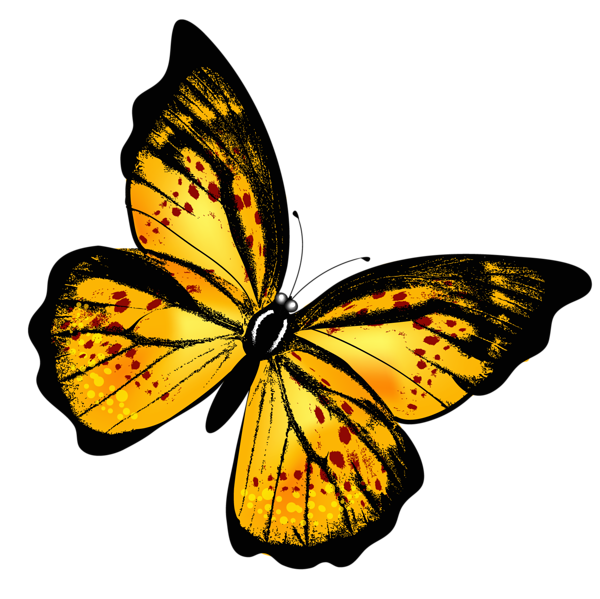 Yellow butterfly png picture. Moth clipart transparent tumblr
