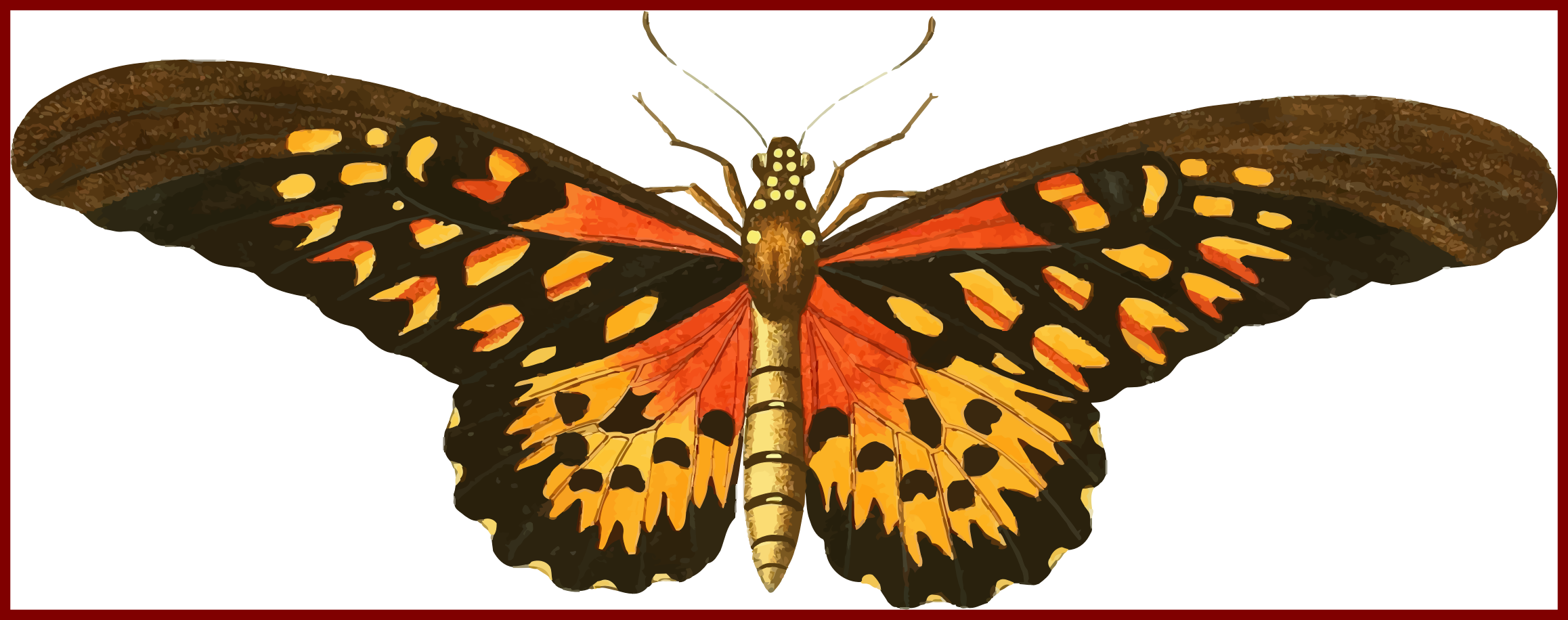 Moth clipart vintage. Awesome image from http