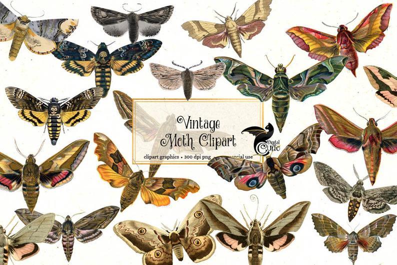 Moth clipart vintage. Moths antique clip art