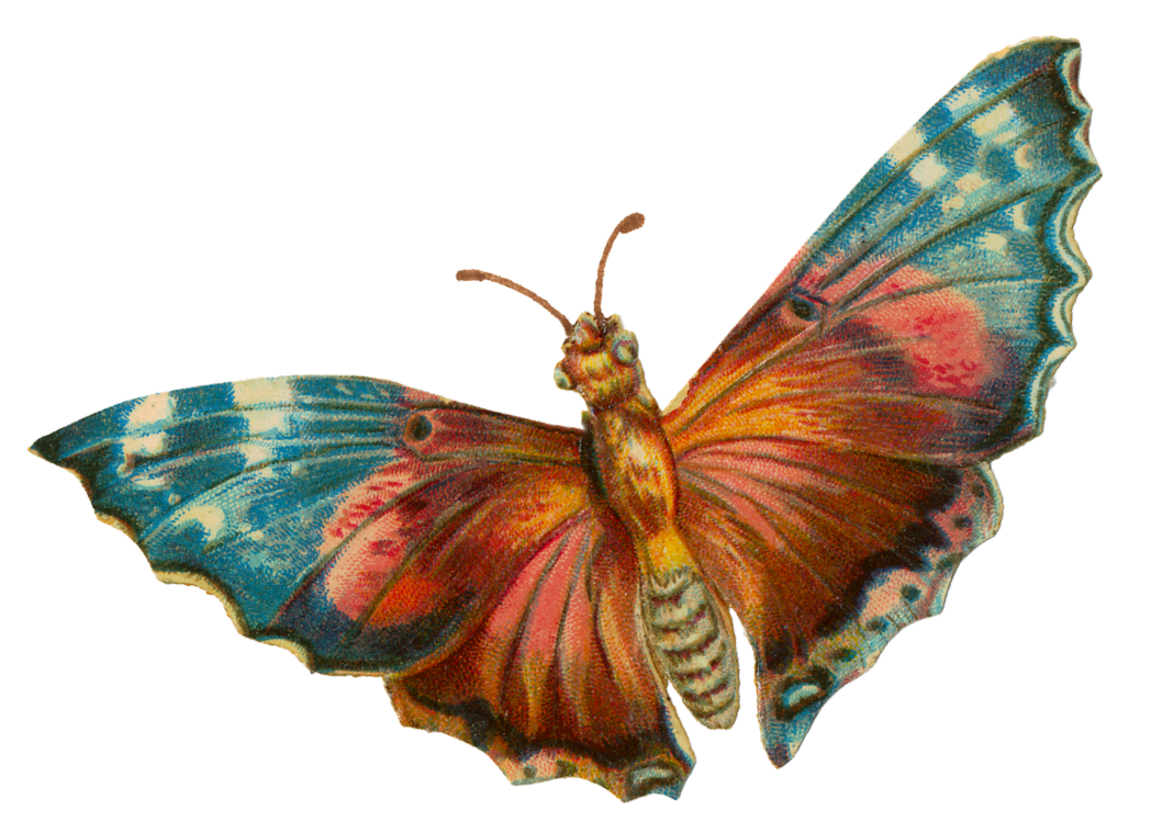 Moth clipart vintage. Category insects graf x