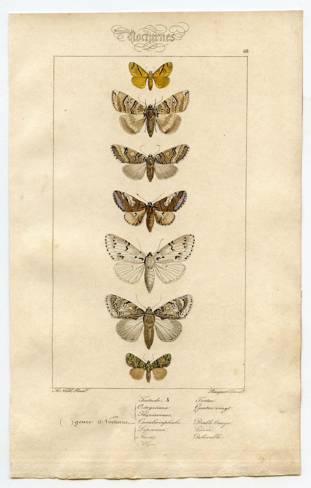 Free antique clip art. Moth clipart vintage