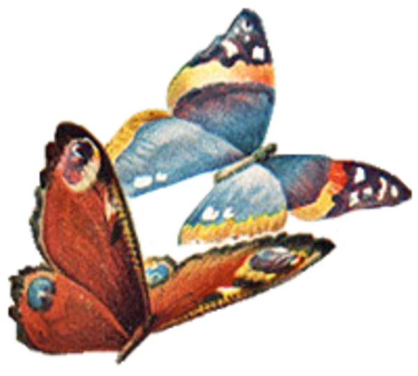 No back facing left. Moth clipart vintage butterfly