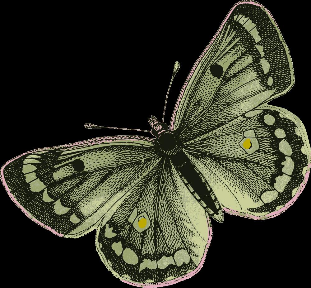 Onlinelabels clip art green. Moth clipart vintage butterfly
