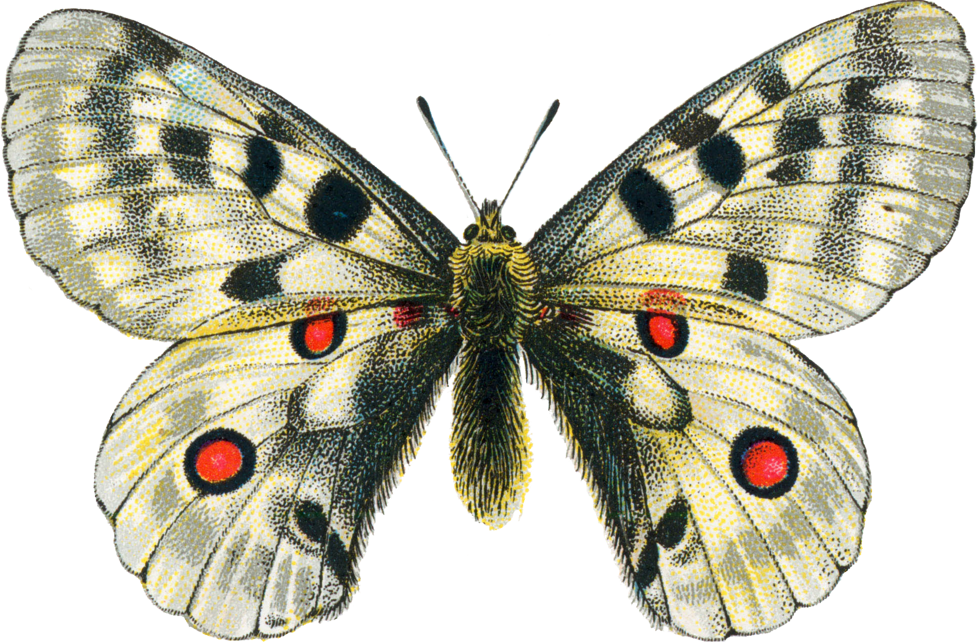 Moth clipart vintage butterfly. Png mart
