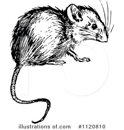 Illustration by prawny . Mouse clipart vintage