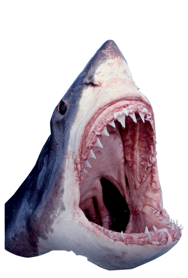 Freetoedit sticker by hanjo. Mouth clipart great white shark