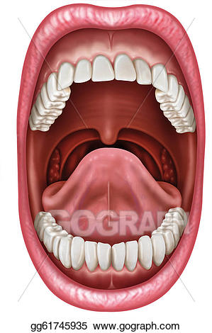 Stock anatomy gg gograph. Mouth clipart illustration