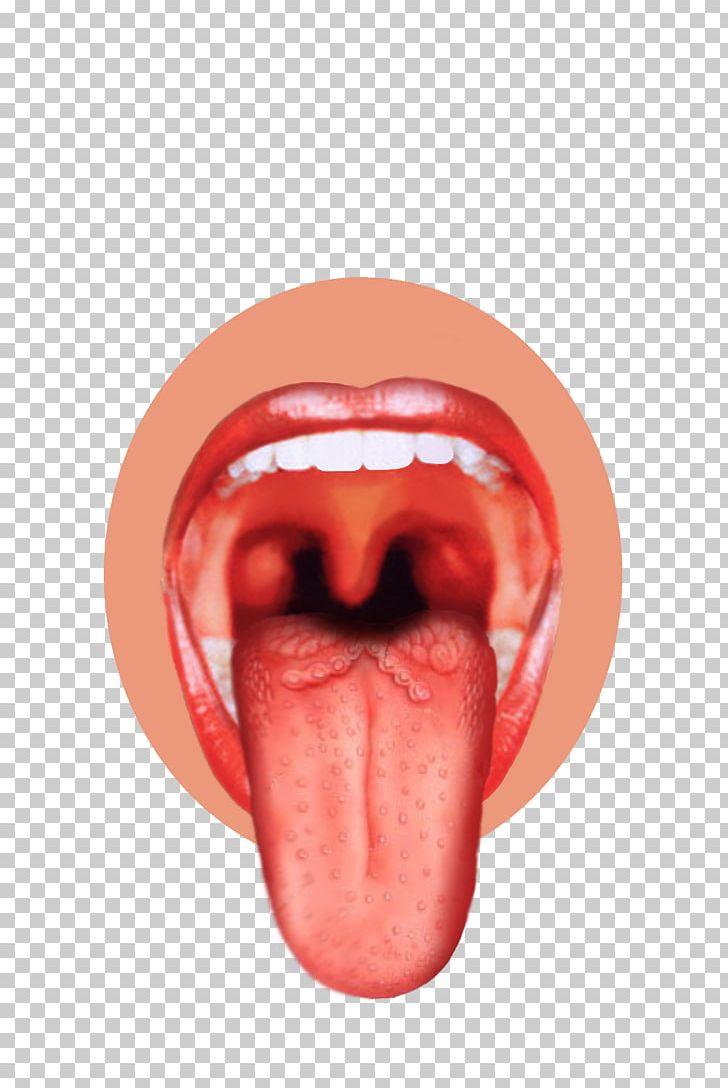 Sensory nervous system bud. Taste clipart sense organ tongue
