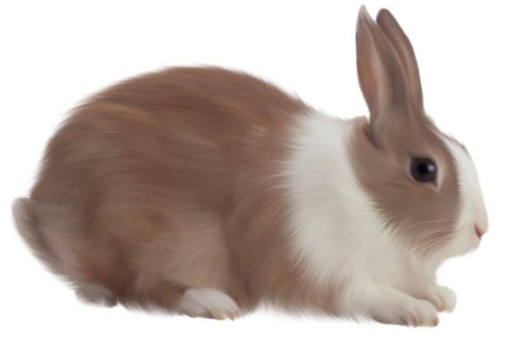 Moving clipart rabbit. Bunny clip art animated