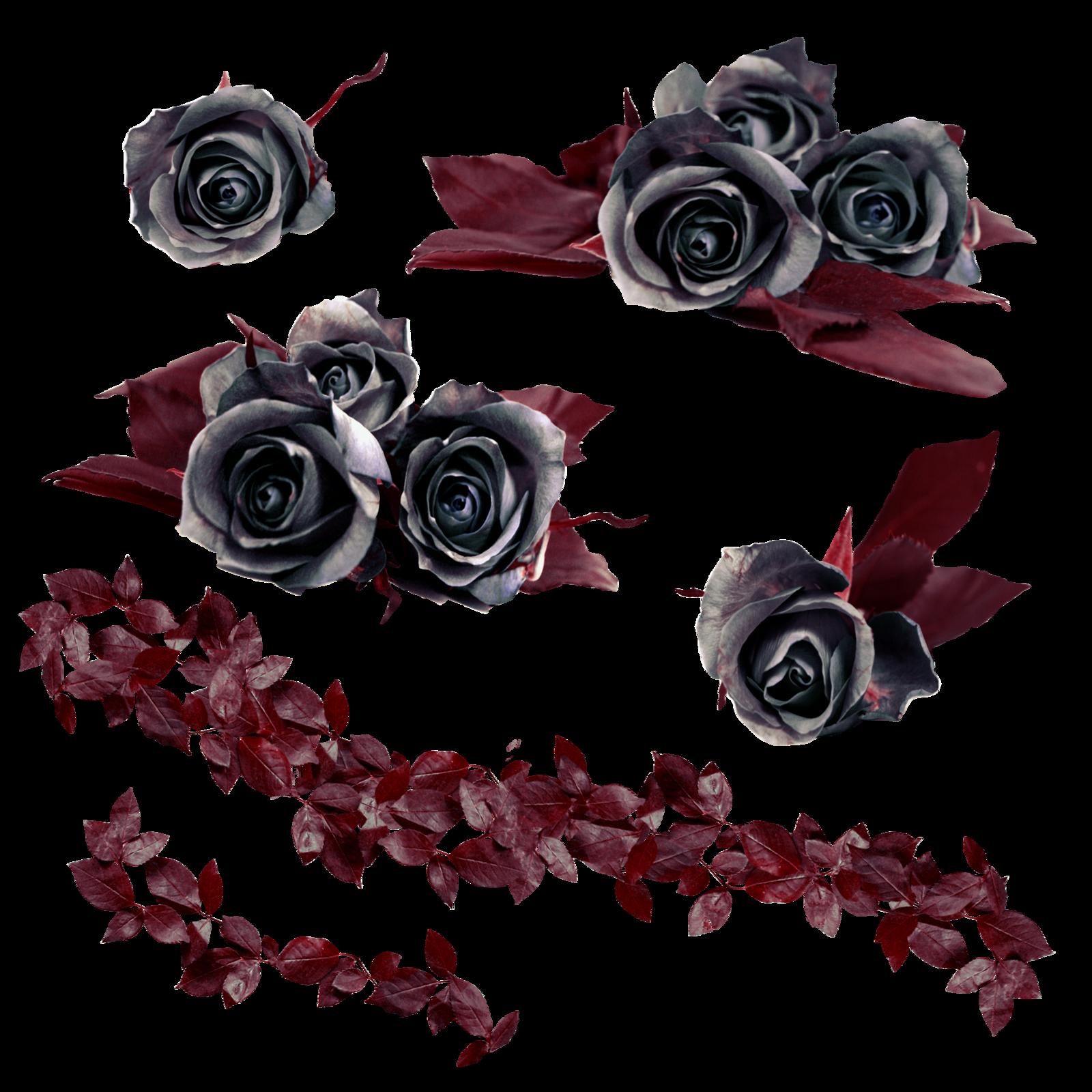 Moving clipart rose. Vine png hd transparent