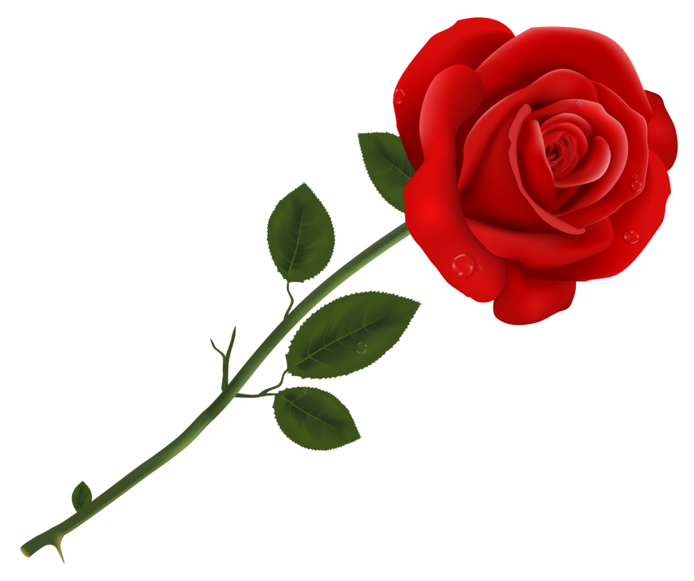 Blog forward daly whos. Moving clipart rose