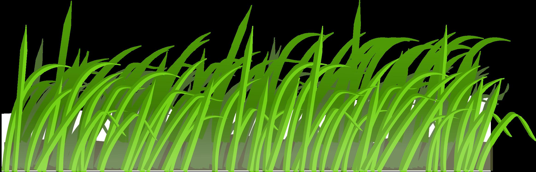 Ocean clipart grass. Lawn mowers garden aeration