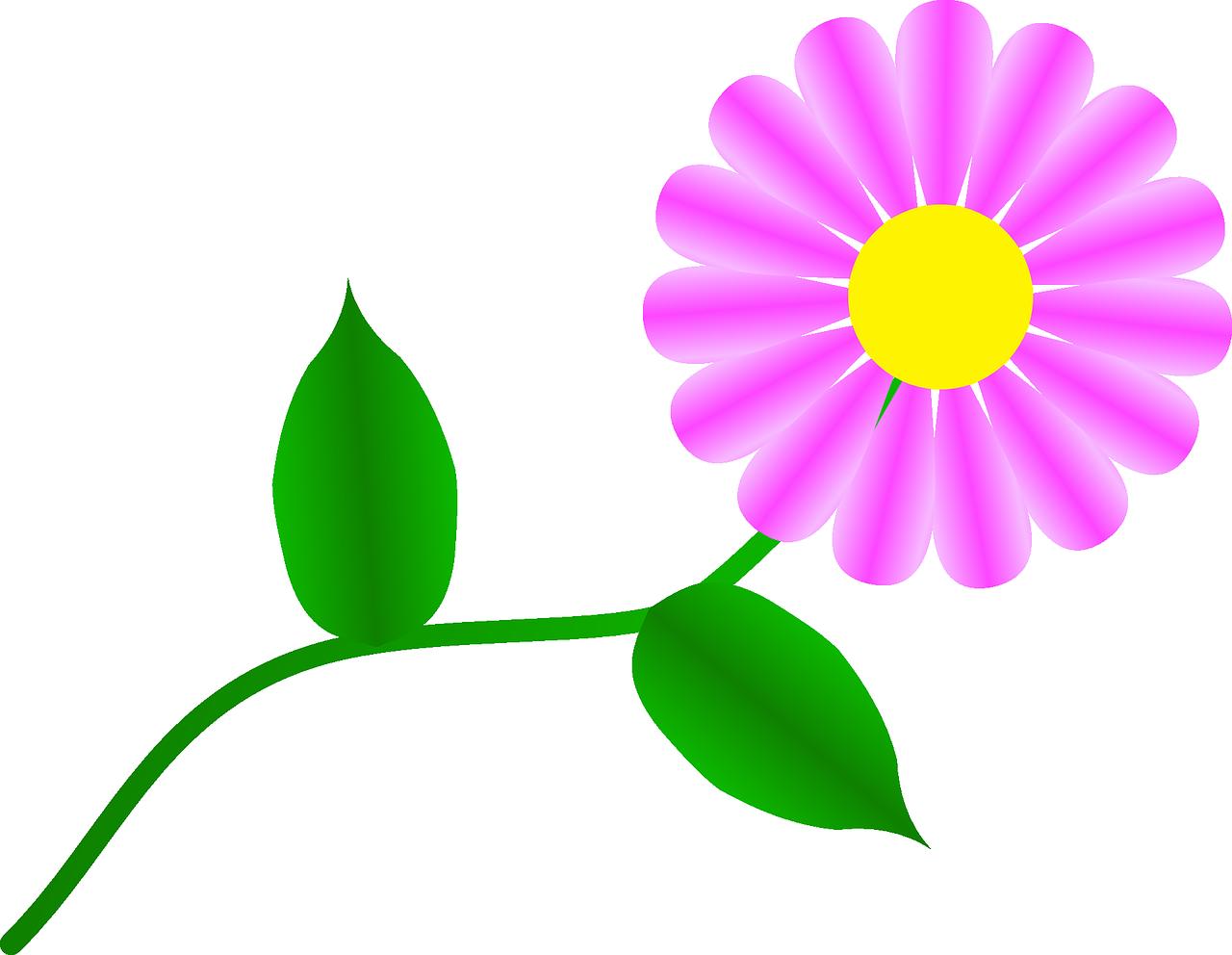 Mug clipart daisy. Fuchsia flower plant pink