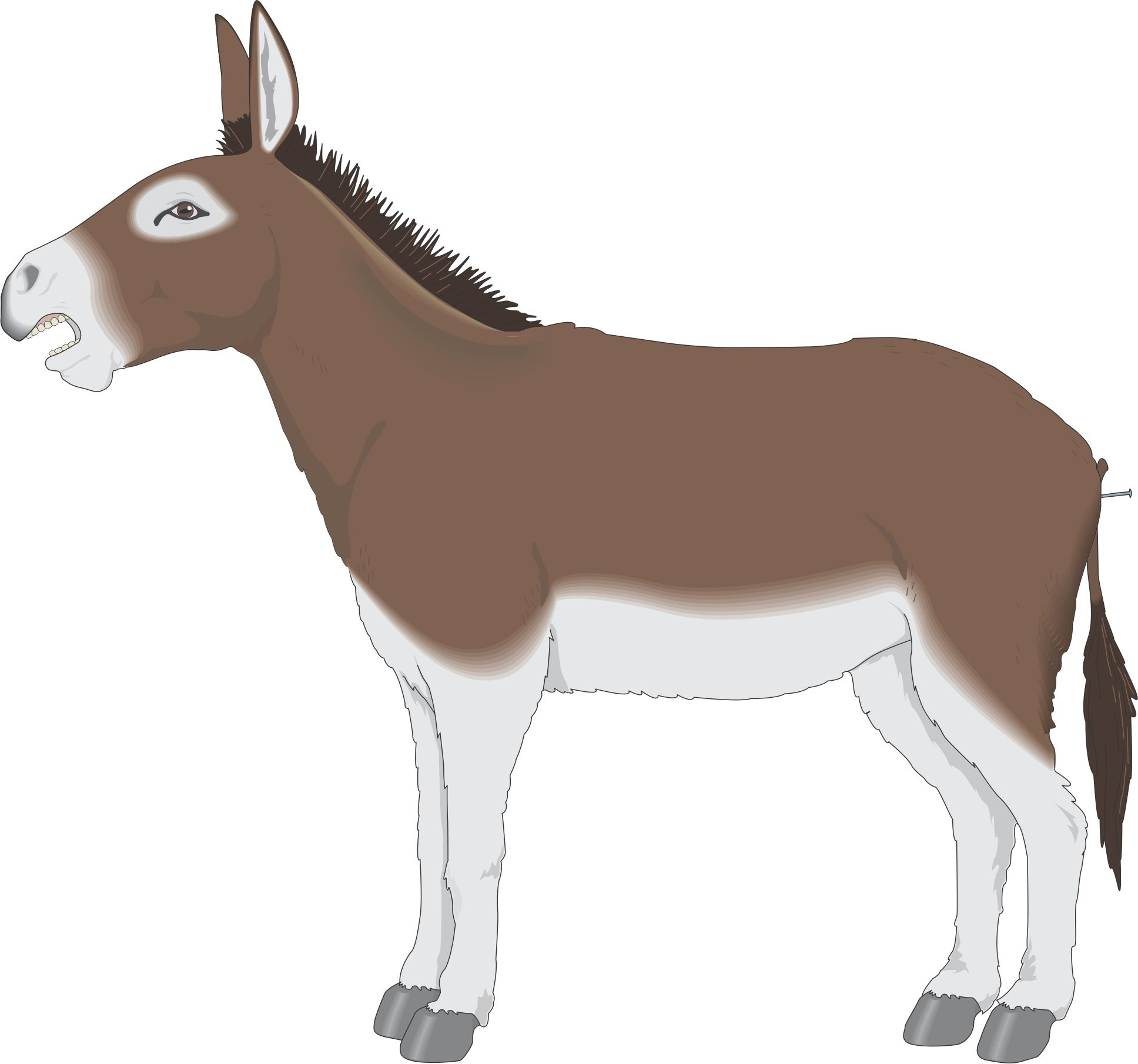 Cartoon back to from. Mule clipart