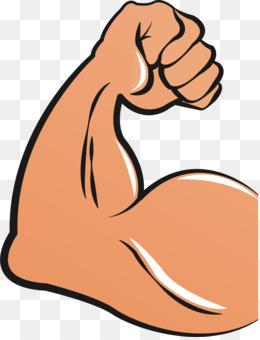 Muscle clipart. Biceps arm clip art