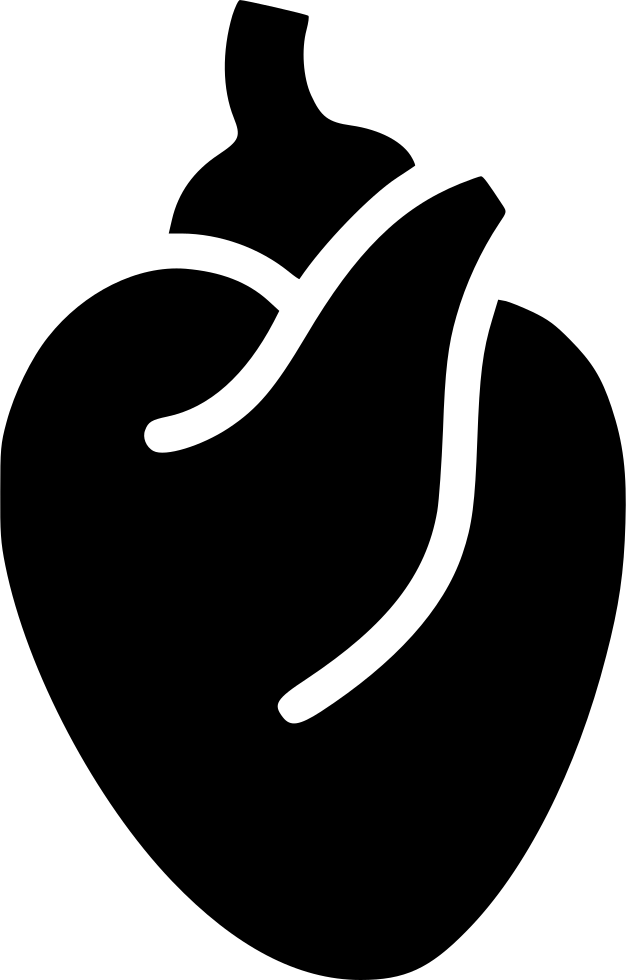 Muscle clipart heart muscle. Blood system body anatomy
