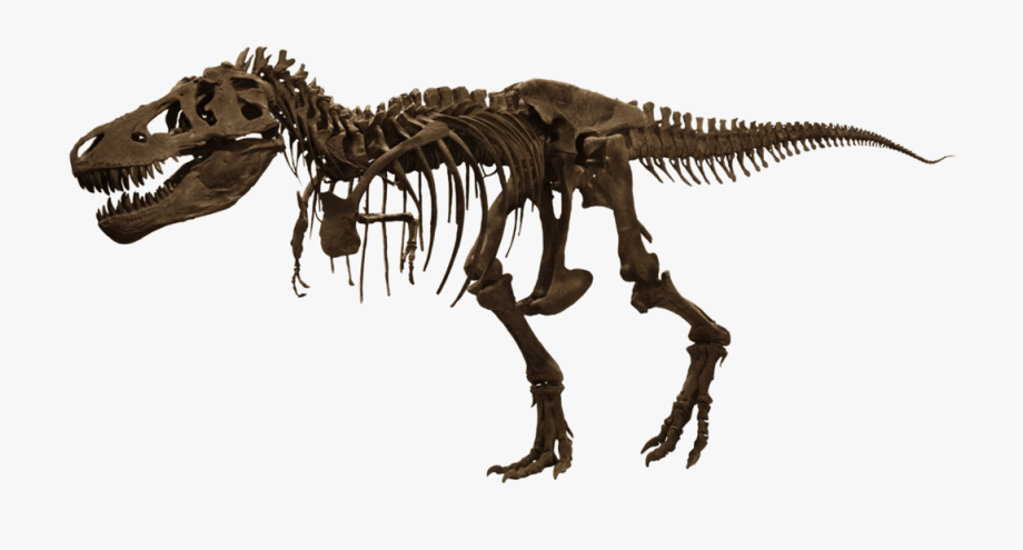 Download american of free. Museum clipart natural history