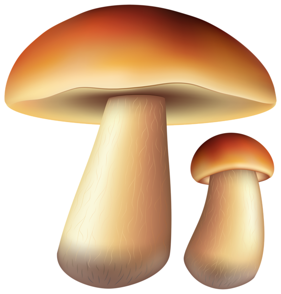 Gallery fall png . Mushrooms clipart autumn