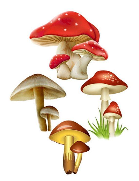 Mushroom image cutout fall. Mushrooms clipart birthday