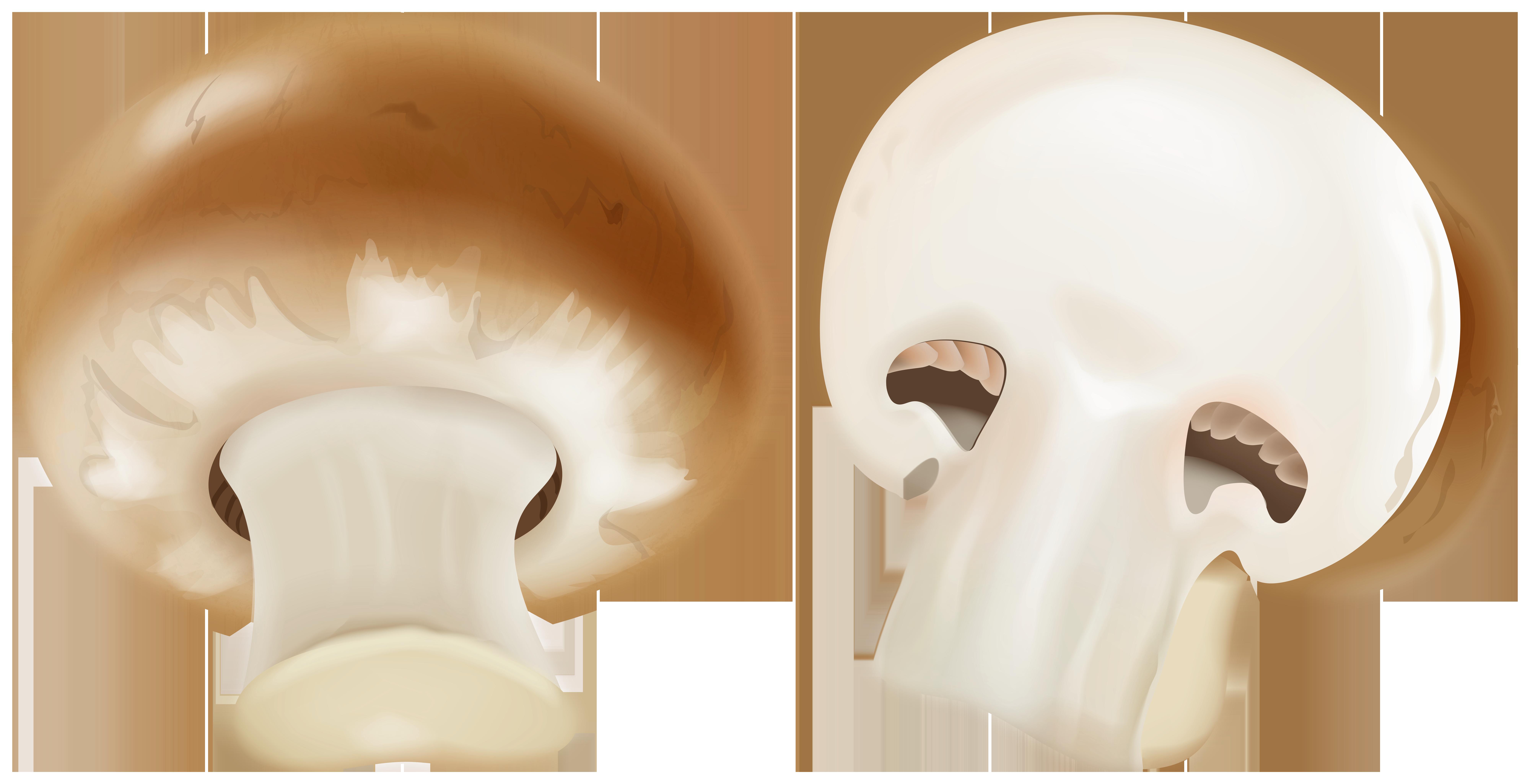 Mushroom clipart brown mushroom. Clip art image gallery