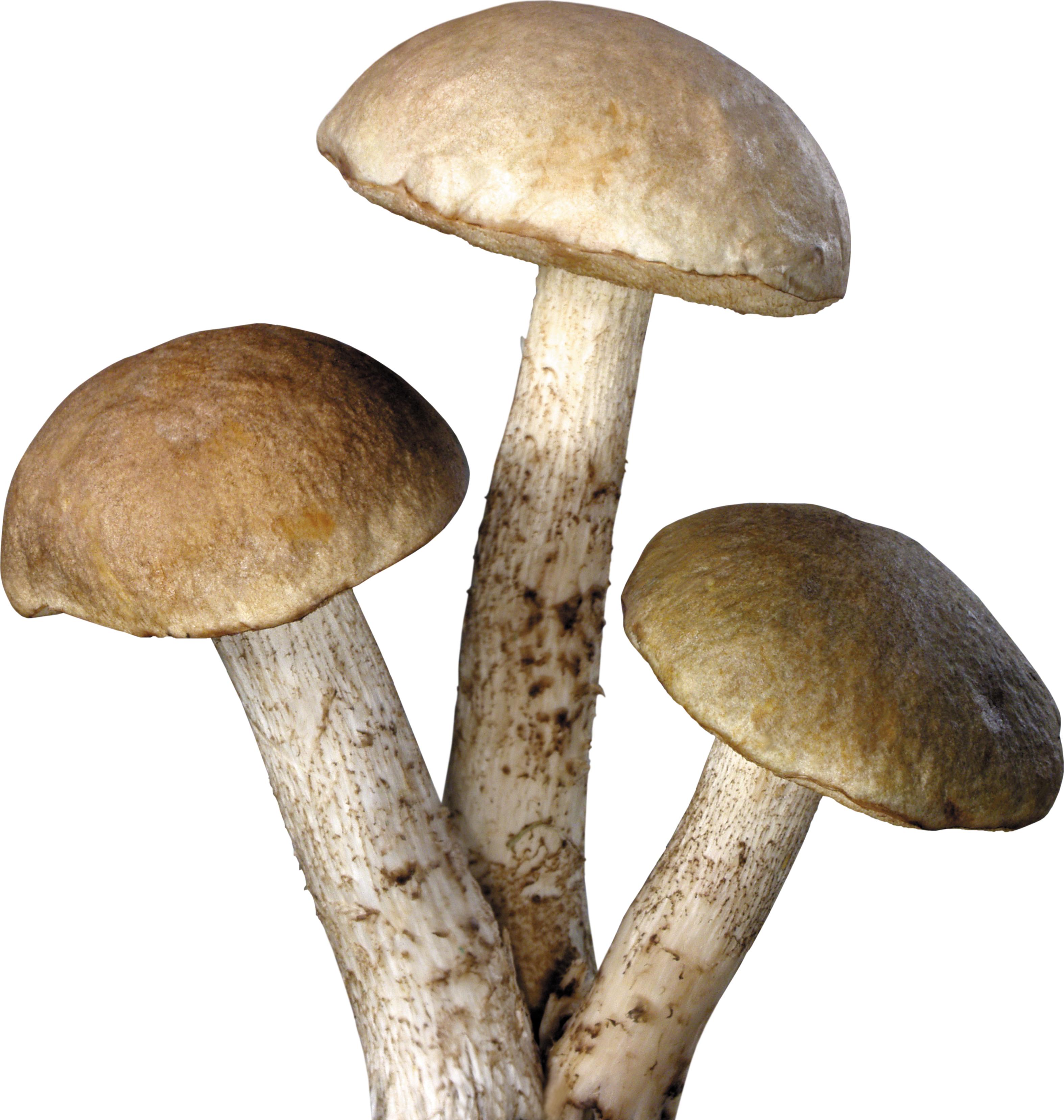 Mushroom png transparent free. Mushrooms clipart cartoon character