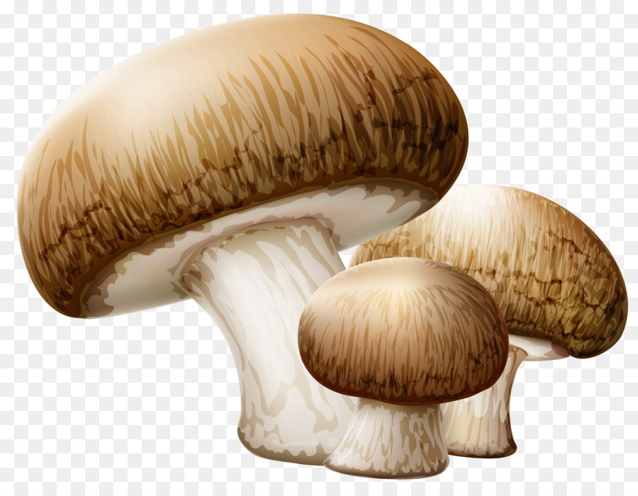 Cartoon transparent clip art. Mushroom clipart edible mushroom
