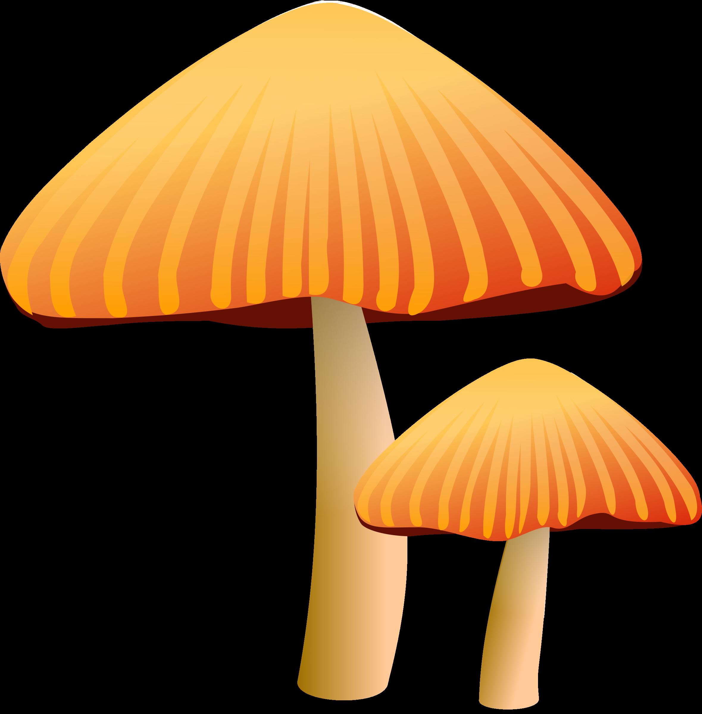 Orange mushroom big image. Mushrooms clipart outline