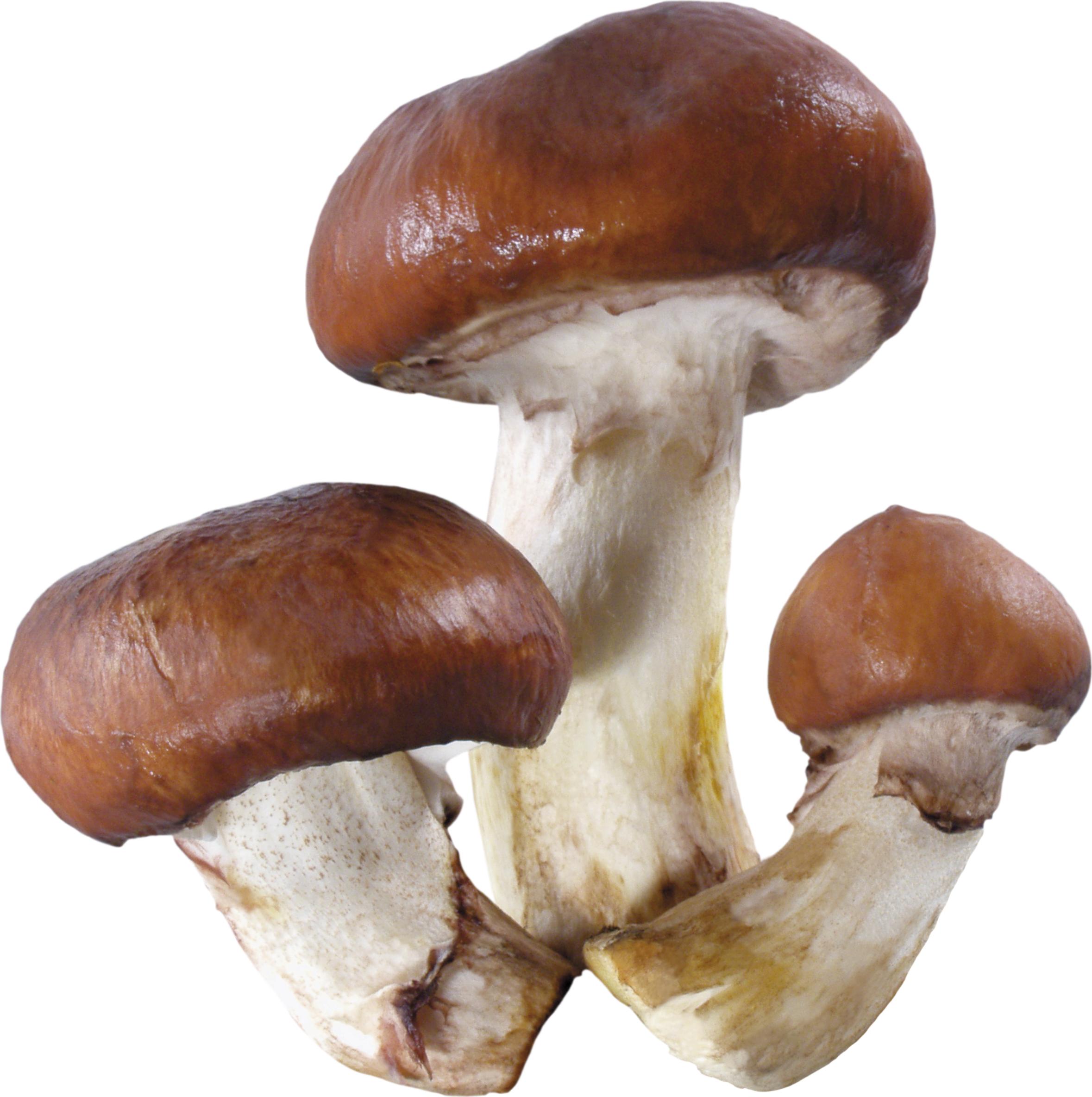 Mushroom clipart edible mushroom. Png image purepng free
