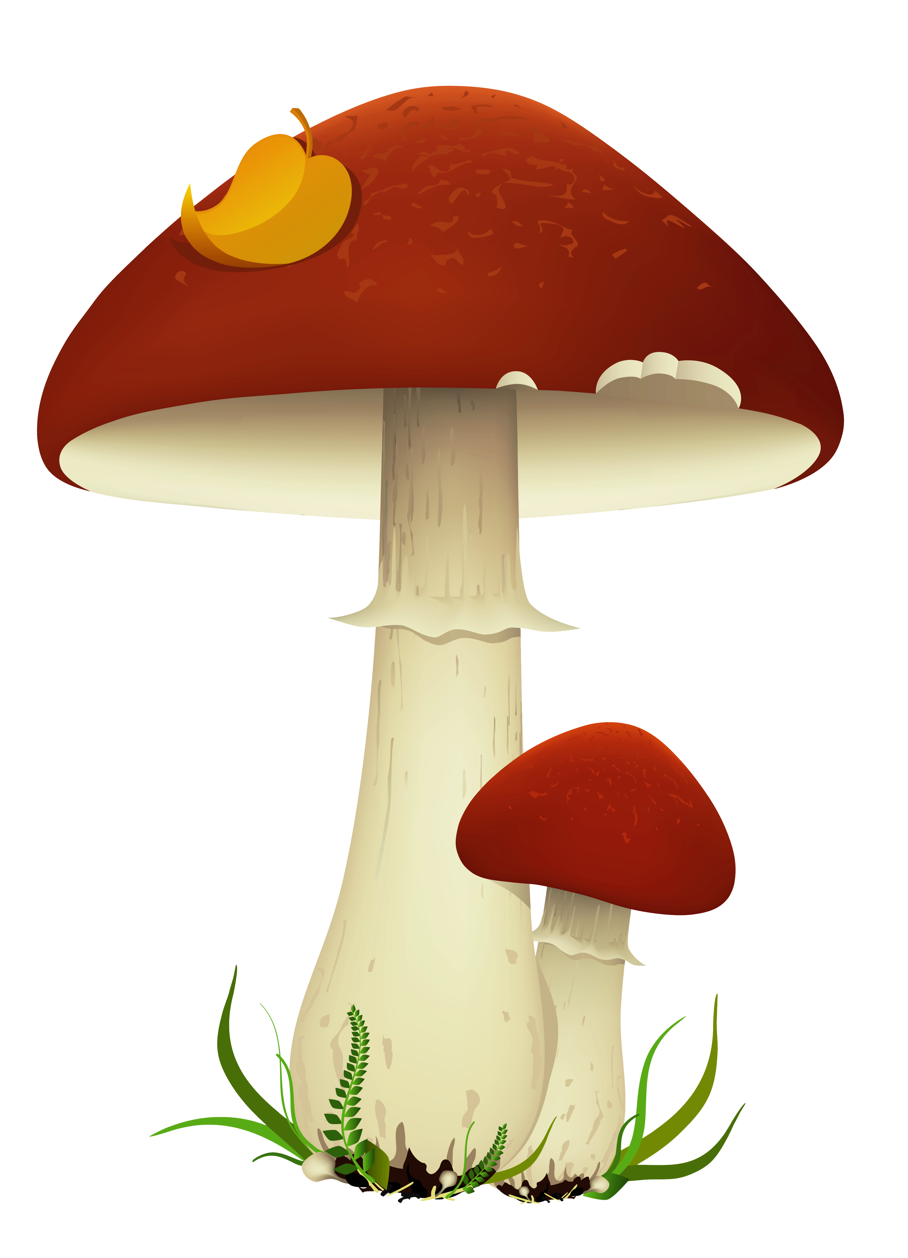Mushrooms clipart brown mushroom. Fall transparent png picture