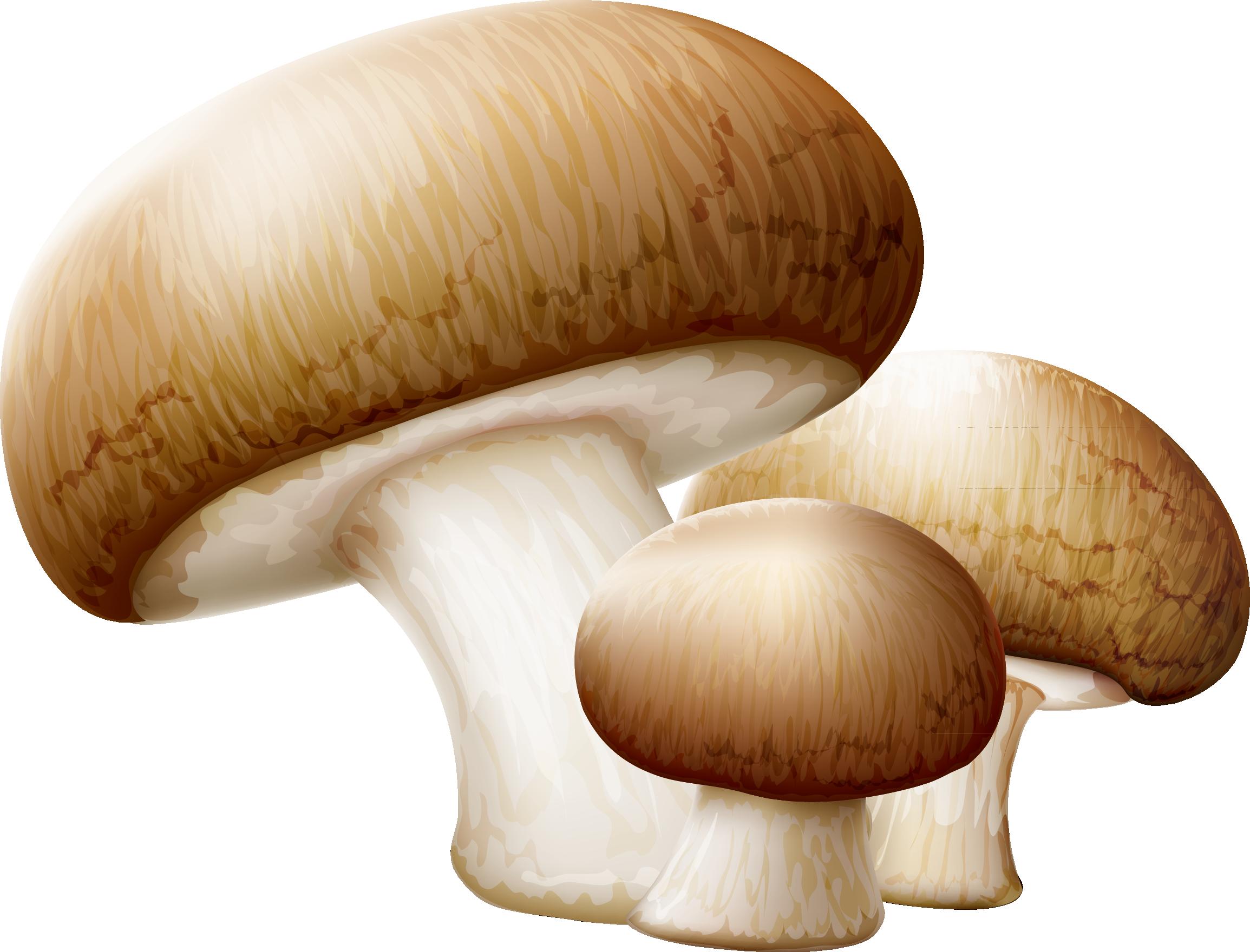 Common clip art mushrooms. Mushroom clipart edible mushroom
