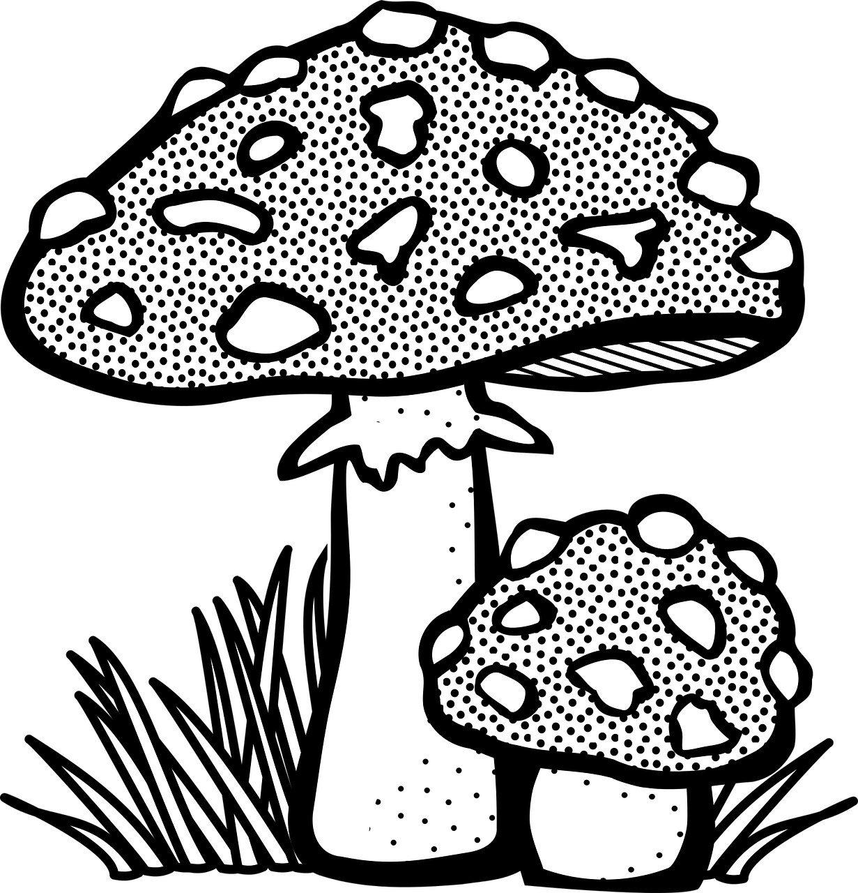 Mushrooms Clipart Line Drawing Mushrooms Line Drawing