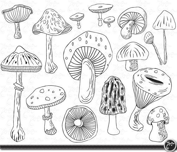 Mushrooms clipart line drawing. Mushroom clip art hand