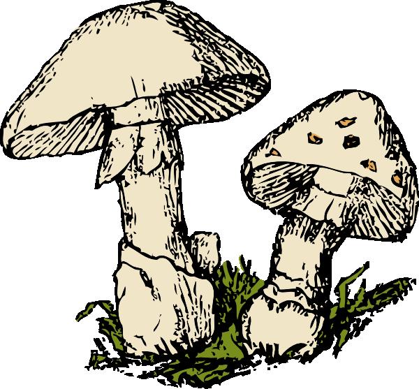 Mushrooms clipart vector. Two clip art at