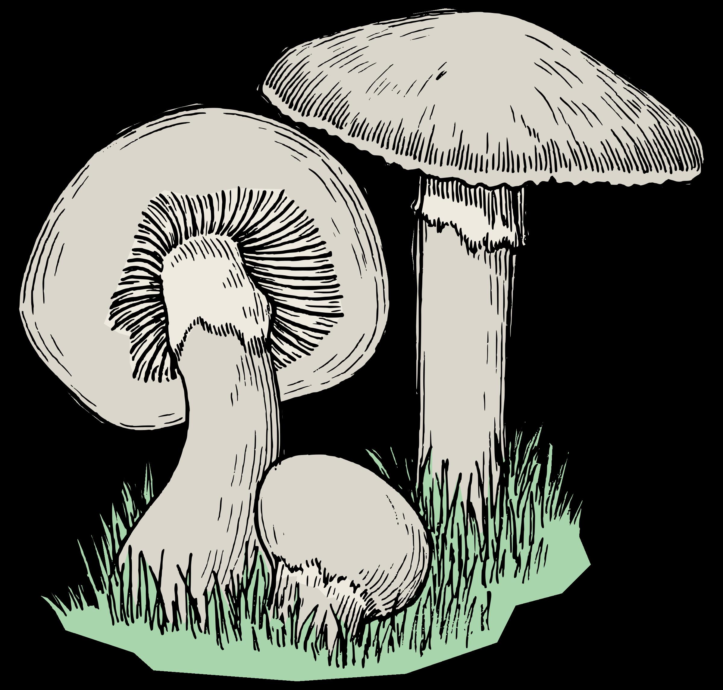Mushroom clipart mushroom tree. Mushrooms colour big image