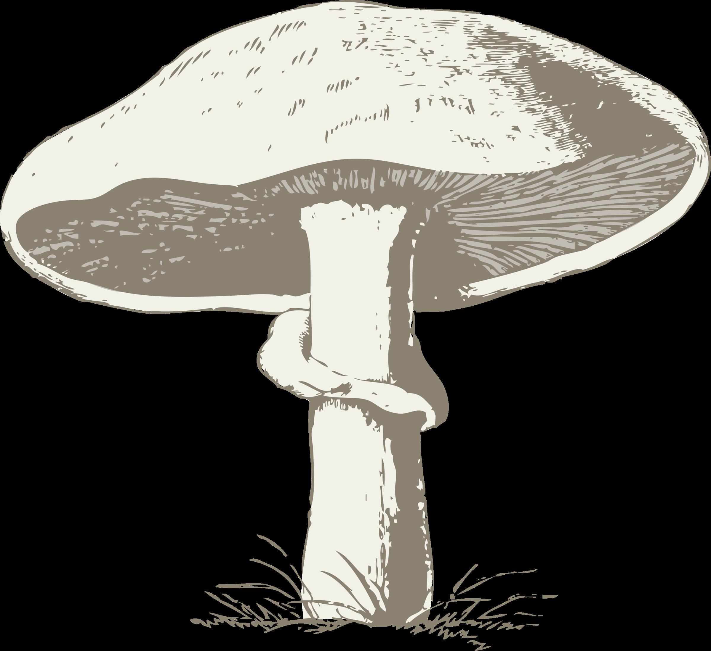 Mushroom. Mushrooms clipart outline