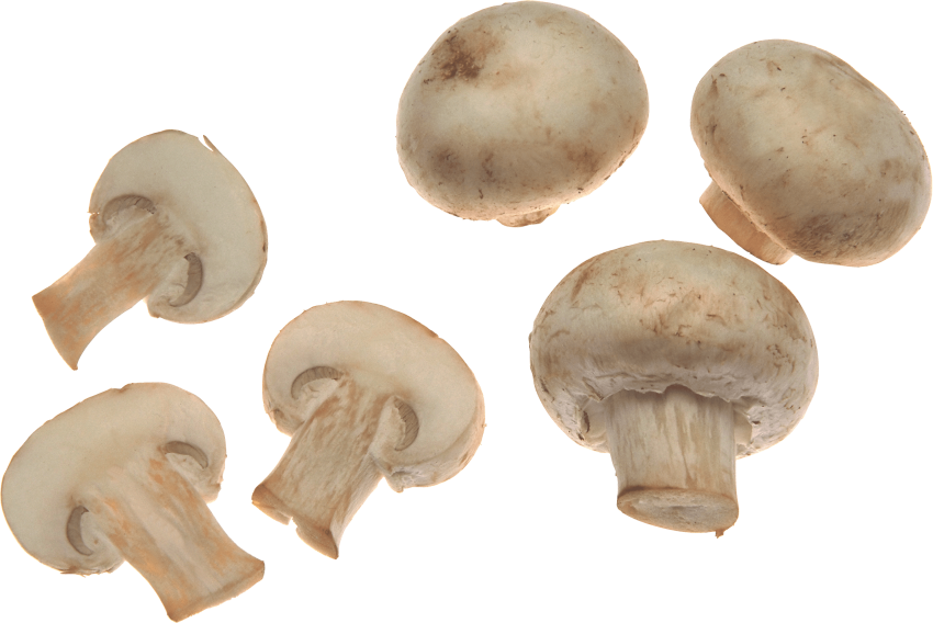 Png free images toppng. Mushrooms clipart brown mushroom