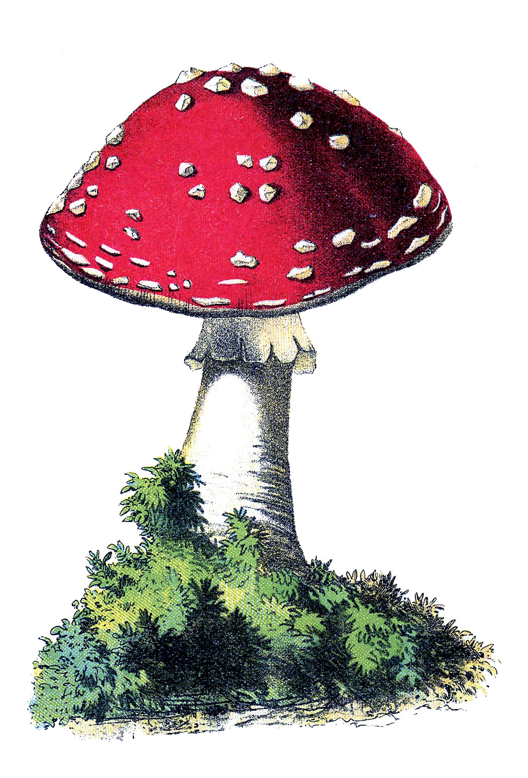 Mushrooms clipart vintage.  mushroom images the