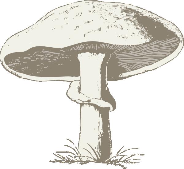 Clip art at clker. Mushrooms clipart mushroom plant