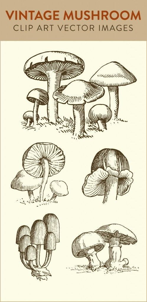 Mushrooms clipart vector. Mushroom clip art vintage