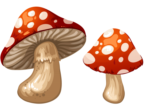 Mushrooms clipart. Png clip art best