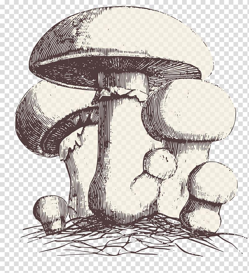 Mushrooms clipart agaricus, Mushrooms agaricus Transparent ...