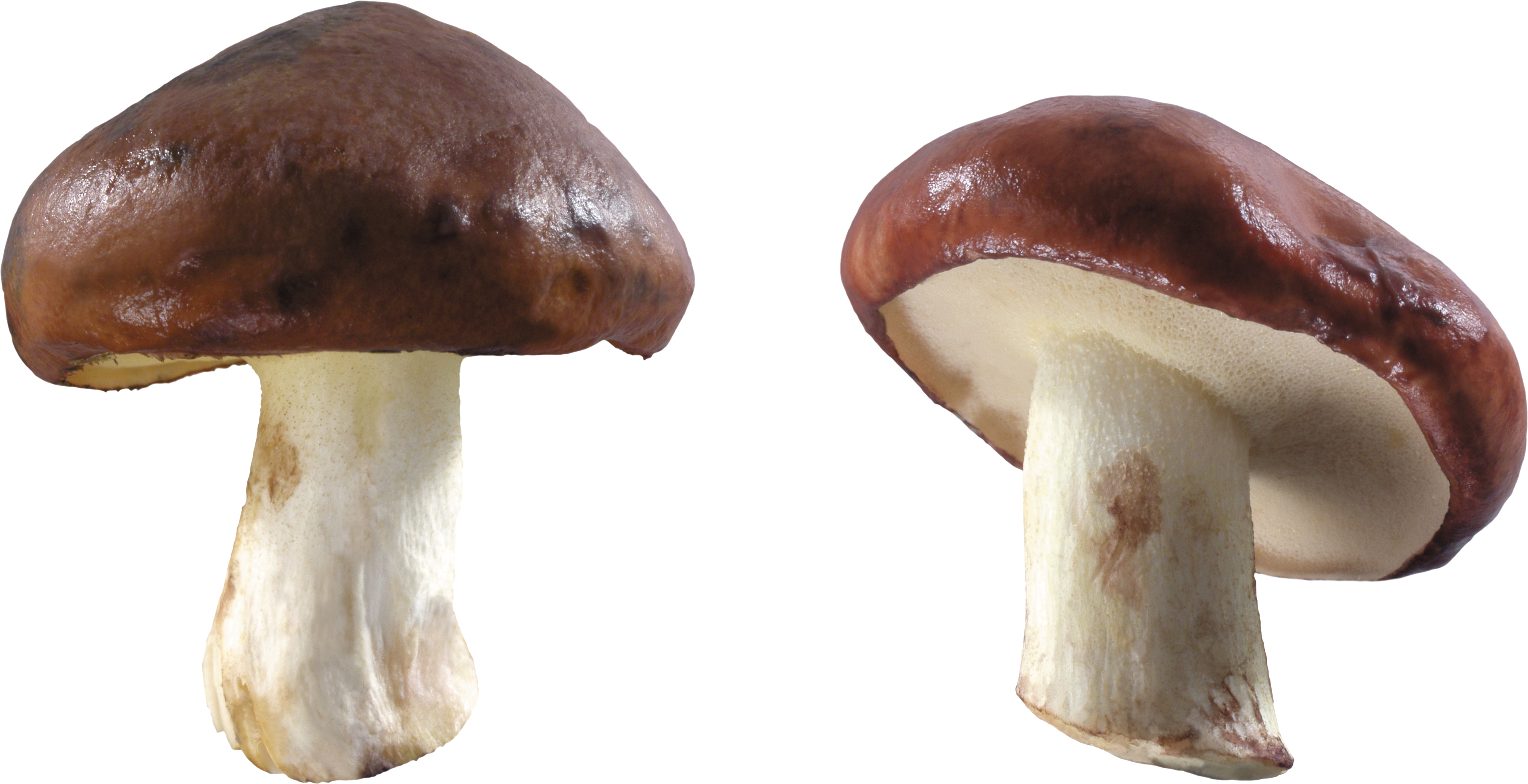 And white png image. Mushrooms clipart brown mushroom