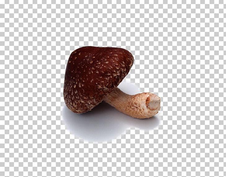 Shiitake png cartoon . Mushrooms clipart mushroom vegetable