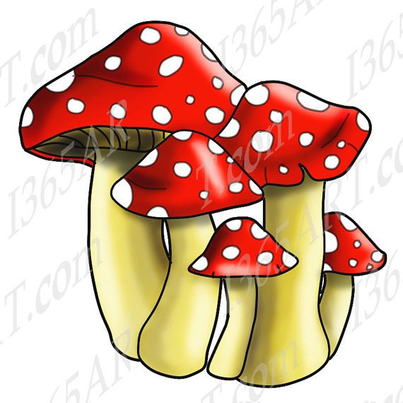 Spotted mushroom clip art. Mushrooms clipart mushroon