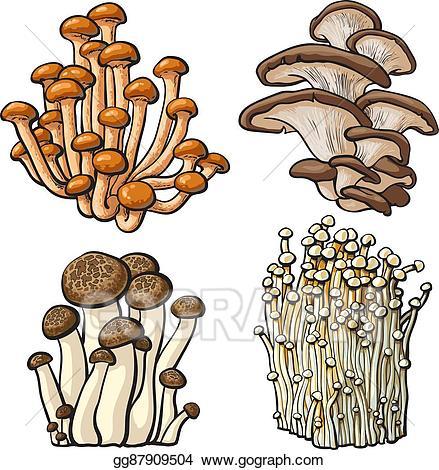 Mushrooms clipart oyster mushroom. Vector art set of