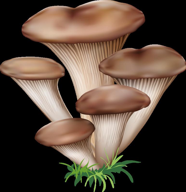 Mushrooms clipart oyster mushroom. Tubes champignons jardin pinterest