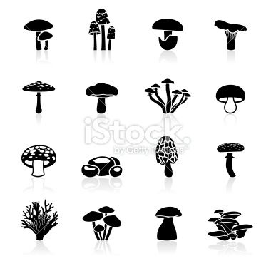 Mushrooms clipart vector. Illustration of different edible