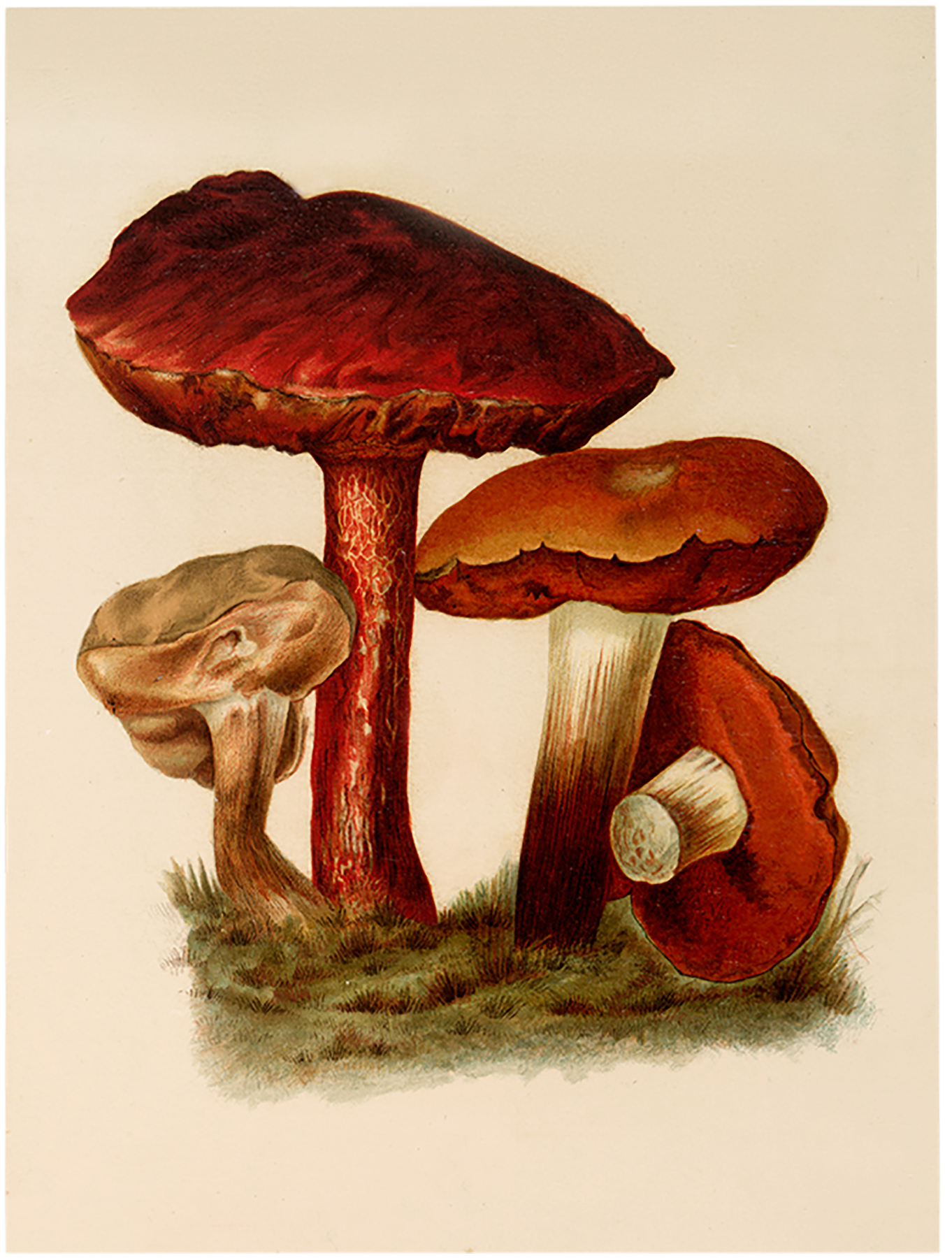 mushroom images the. Mushrooms clipart vintage