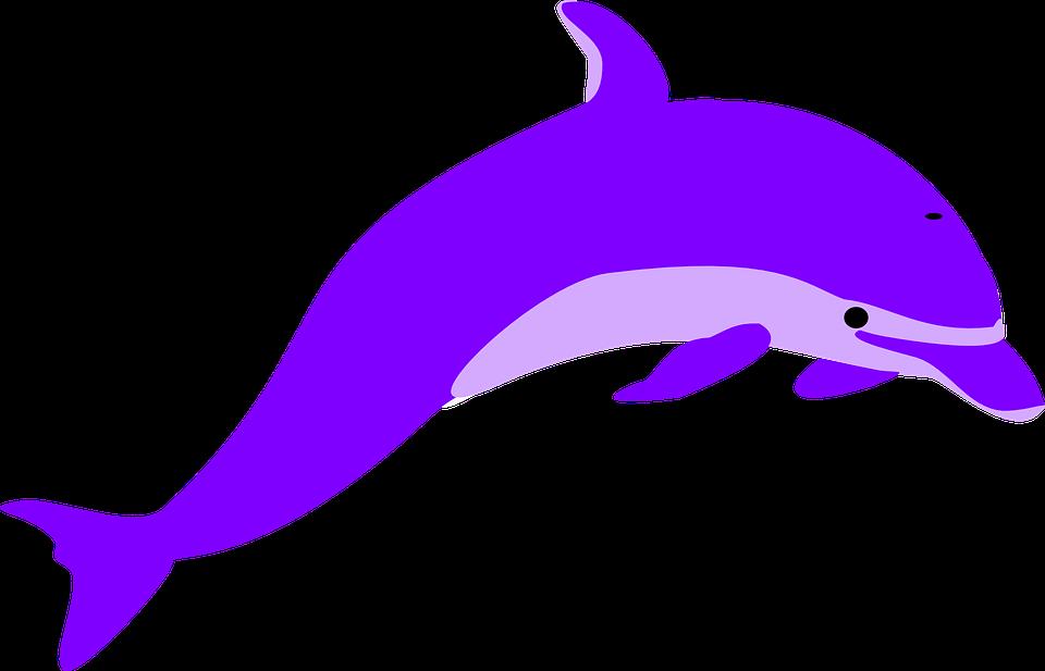 Imagem gratis no pixabay. Narwhal clipart classy
