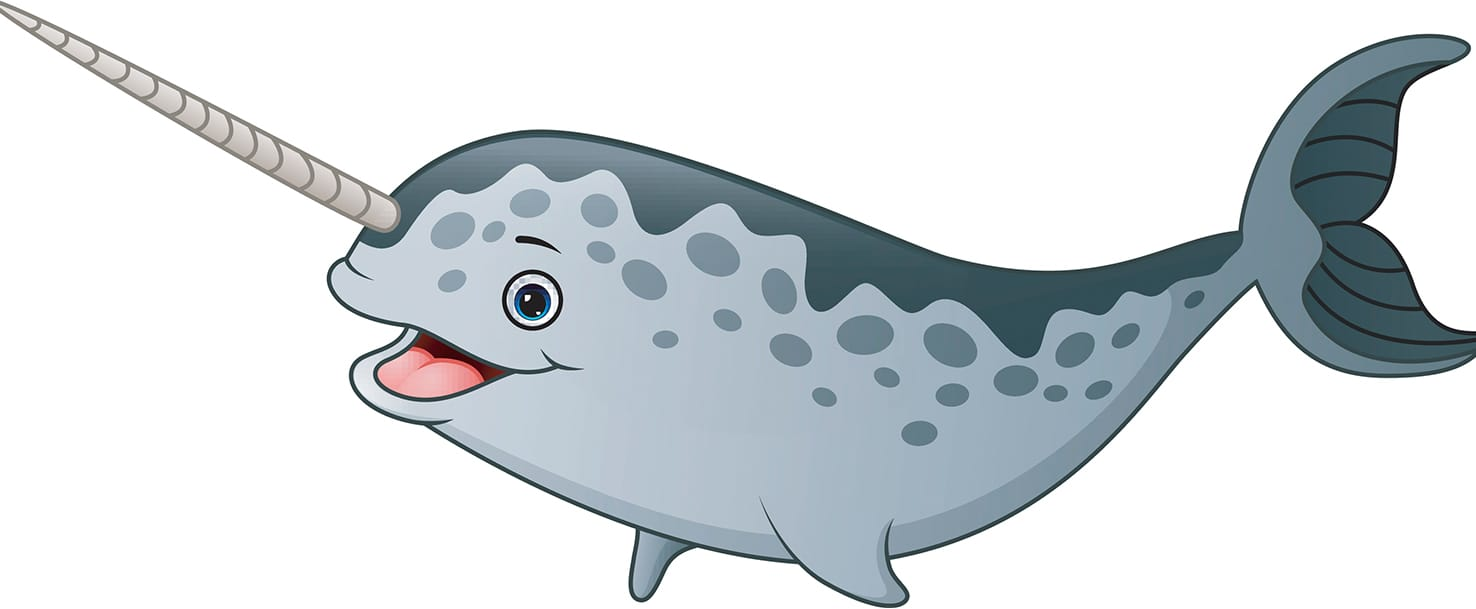 what is a. Narwhal clipart male